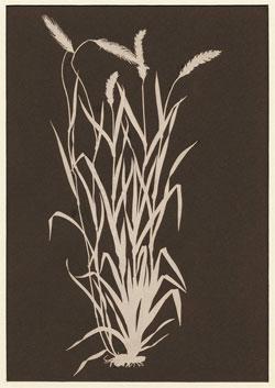 Ährenbüschel. Weißer Scherenschnitt auf schwarzem Papier